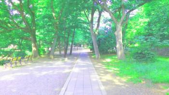 神奈川県ドックラン