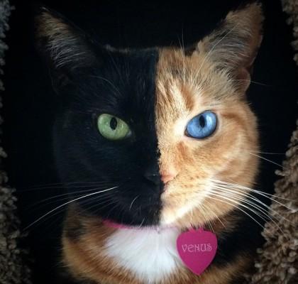 ヴィーナス猫