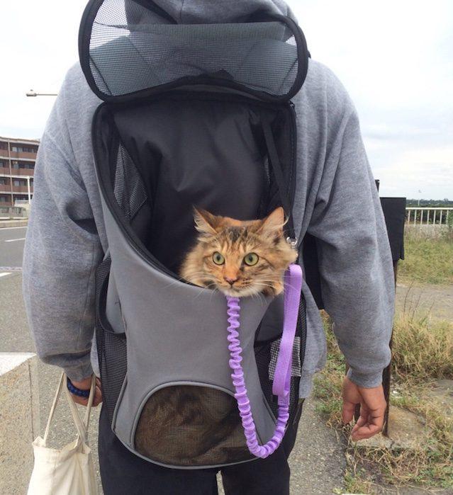 2017年おすすめの猫用キャリーバック・リュック16選   pettimo