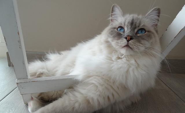 cat-1726026_960_720