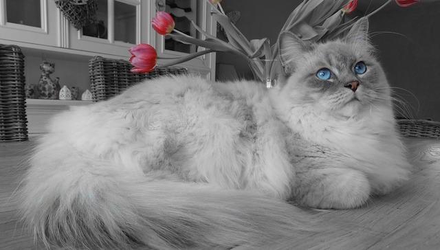 cat-1784428_960_720