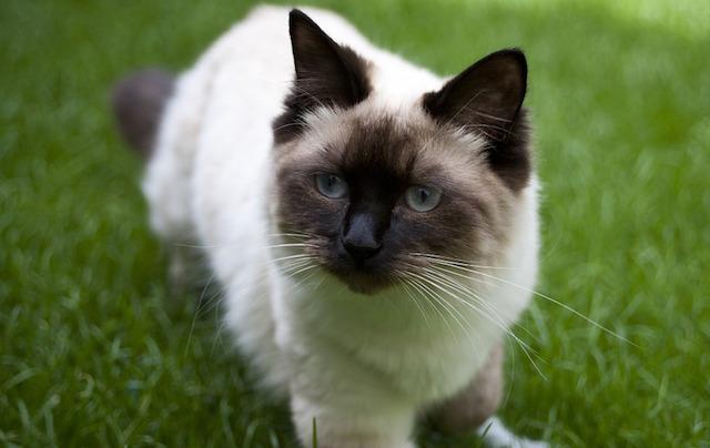 cat-439129_960_720