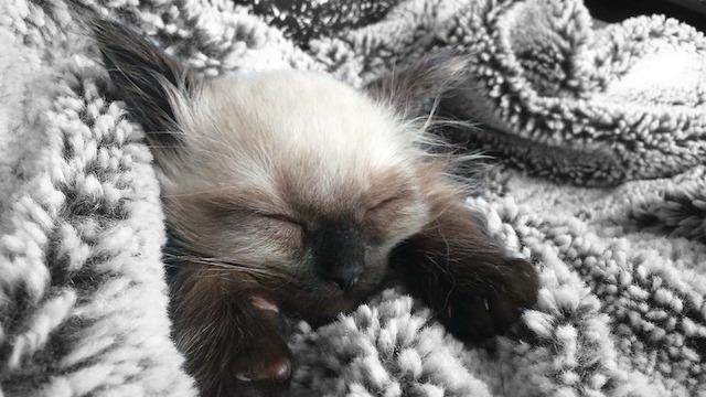 kitten-906876_960_720